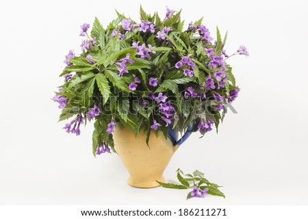 Spring first flowers in ceramic pot isolated - stock photo