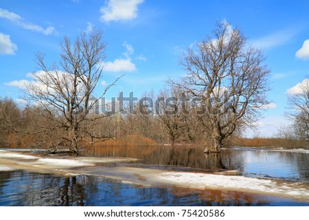 spring flood in oak wood - stock photo