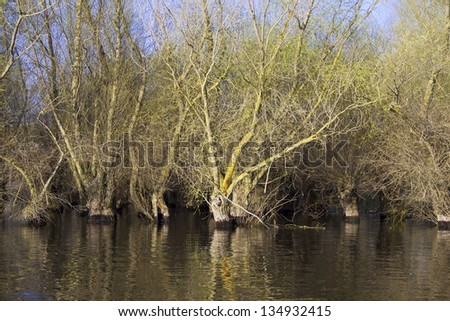 spring flooded willow forest in the Danube Delta, Romania - stock photo
