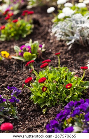 Spring flowe rbed in the garden - stock photo