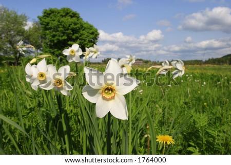 Spring flower. - stock photo