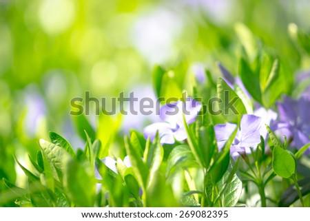 Spring flower close-up. Shallow DOF. - stock photo