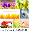 spring flower collage from several image - stock photo
