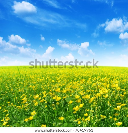 Spring flower field and blue sky.