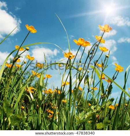 Spring flower field and sun. - stock photo