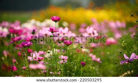 spring flower garden - stock photo