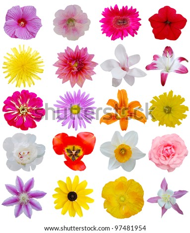 Spring flower heads on collage - stock photo