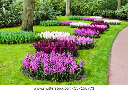 Spring flower. hyacinth - stock photo