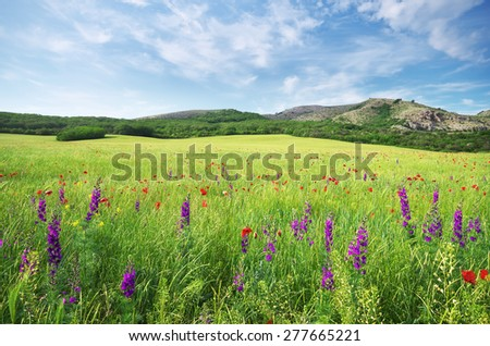 Spring flower in green meadow. Beautiful landscapes. - stock photo