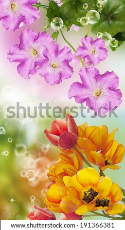 Spring flower.Nature floral background - stock photo