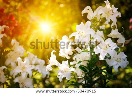 Spring flower on natural background - stock photo