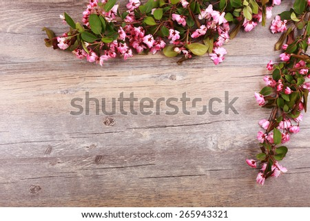 Spring flower on wood background - stock photo
