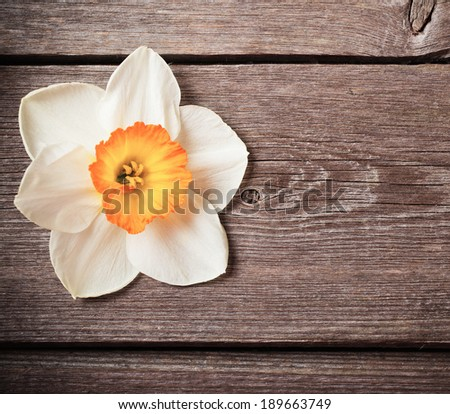 spring flower on wooden background - stock photo