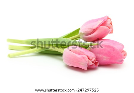Spring flower pink tulips bouquet isolated on white background. - stock photo