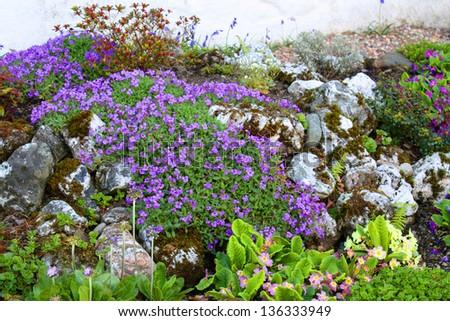 Spring flowerbed in garden. - stock photo