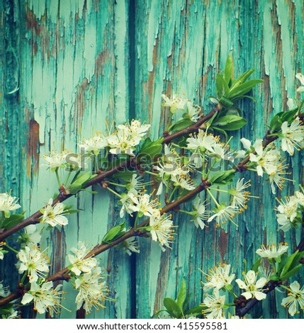 Spring flowering branch on a green wooden background. Blossoming apricot branch on a wooden table - stock photo