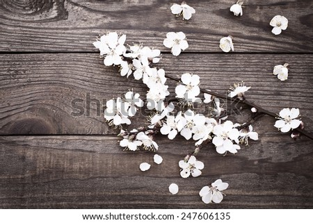 Spring. Flowering branch with white delicate flowers on wooden surface. Declaration of love. Wedding card, Valentine's Day greeting. Wedding background. - stock photo