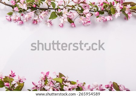 Spring flowering branches, blossoms Almond isolated on white background - stock photo