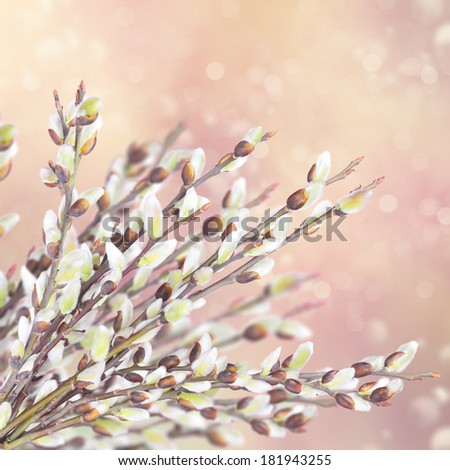 Spring flowering branches of willow - stock photo