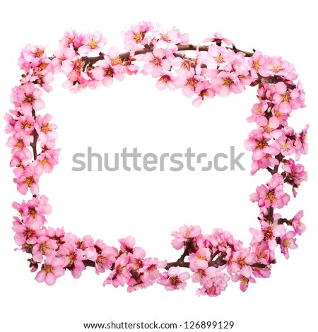 Spring flowering branches, pink flowers, no leaves, blossoms Almond  frame isolated on white background. - stock photo