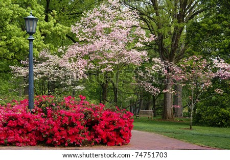 Spring flowering Dogwood and Azaleas - stock photo