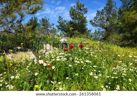spring flowering in nature reserve in a neighborhood Nazareth, Lower Galilee, Israel - stock photo