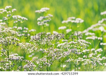 Spring flowering in the northern Italy  - stock photo