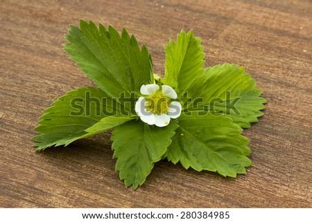 spring, flowering strawberry, white flowers, green leaves - stock photo