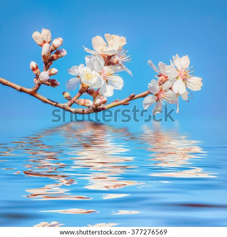 Spring Flowers against Blue Sky - stock photo