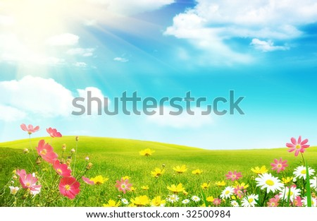 Spring flowers and a grassy meadow - stock photo