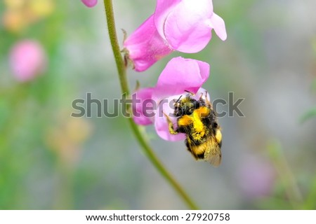 Spring flowers and bee on field - stock photo