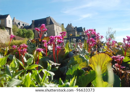 Spring flowers and historical buildings in Le Mans, France.