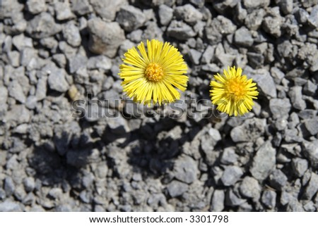 Spring flowers are blooming out of a rocky gray ground