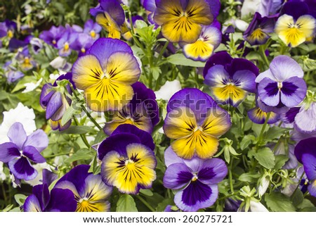 Spring Flowers at Betty Ford Garden in Vail Colorado - stock photo