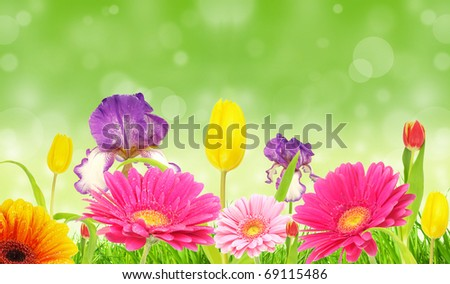 Spring flowers background - stock photo