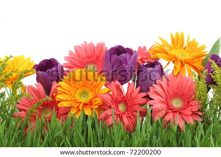 Spring flowers background stock photo royalty free 72200200 spring flowers background mightylinksfo Images