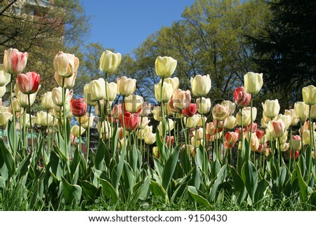 Spring Flowers blooming in the City - stock photo