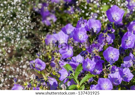 Spring flowers bluebells in the forest - stock photo