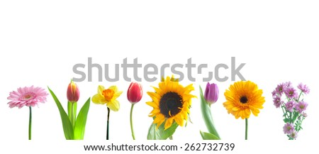 Spring flowers border  - stock photo
