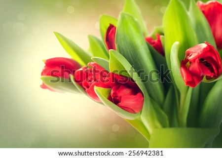 Spring Flowers bunch. Beautiful red Tulips bouquet. Elegant Easter or Mother's Day gift over blurred green nature background. Springtime - stock photo