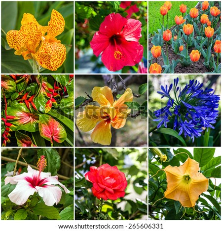 Spring flowers collage - stock photo