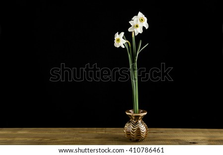 spring flowers daffodils isolated on a black background - stock photo