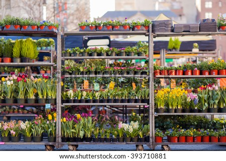 Spring Flowers from the Union Square farmer's market.  Easter lilies, tulips, daffodils - stock photo