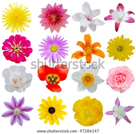 Spring flowers in collection - stock photo