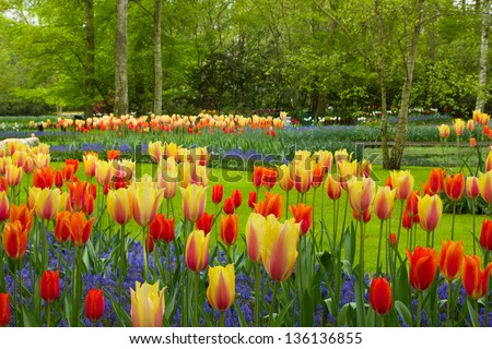 spring flowers in dutch spring garden Keukenhof in Netherlands - stock photo