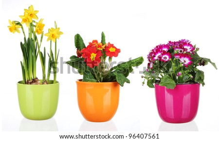 Spring flowers in flowerpots, isolated on white background