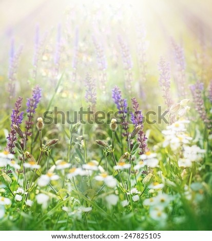 Spring flowers in meadow - stock photo