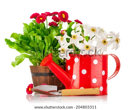 Spring flowers in pot and watering can. Isolated on white background - stock photo