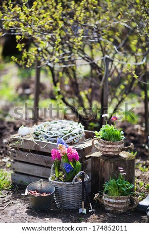 Spring flowers in pots in the garden, Easter Sunday - stock photo