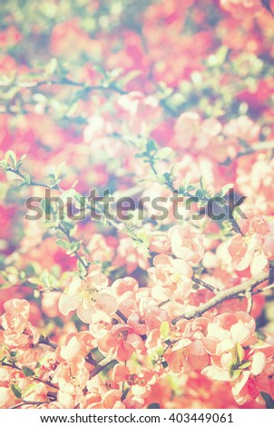 Spring flowers in sunlight bright background - stock photo